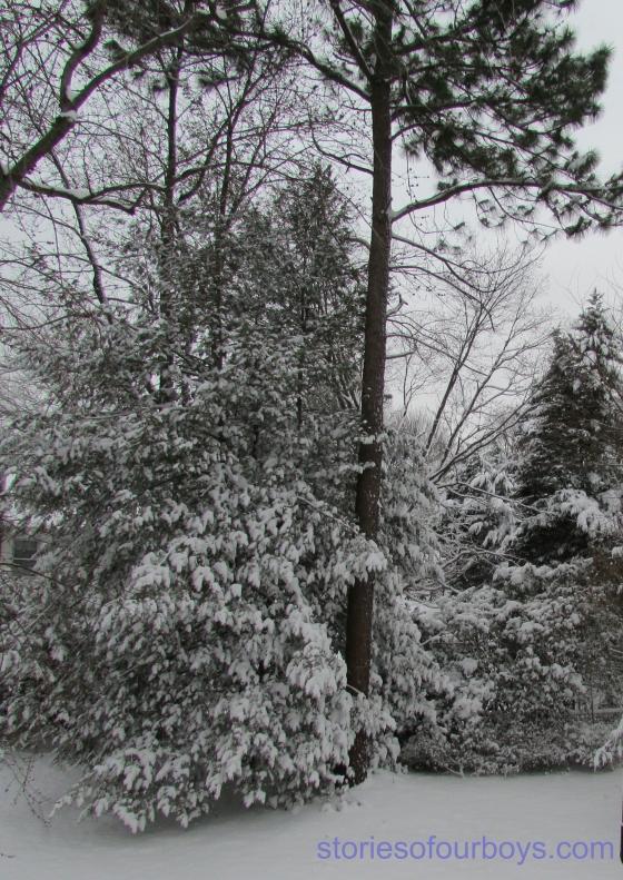 snowshots14