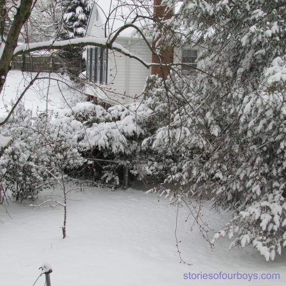 snowyard14