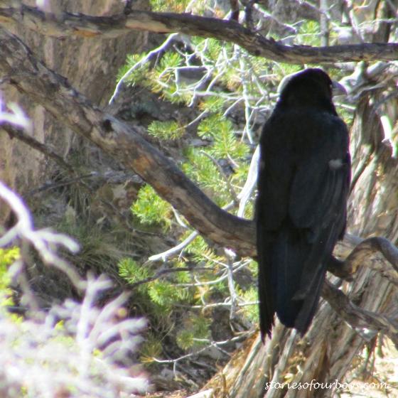 grandcanyonbird