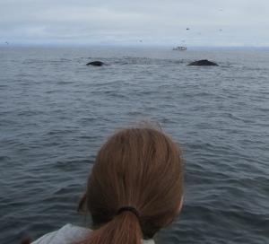 2 humpbacks