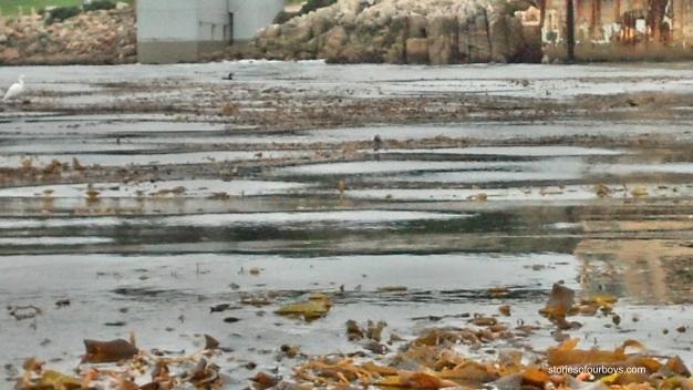 kelpforrest