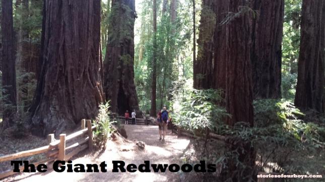 santacruzredwoods_Fotor